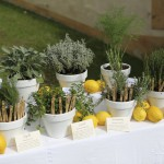 tie the knot in tuscany aromatic herbs