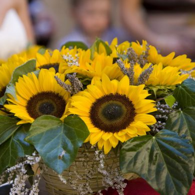 Sunflower – Rustic dream!